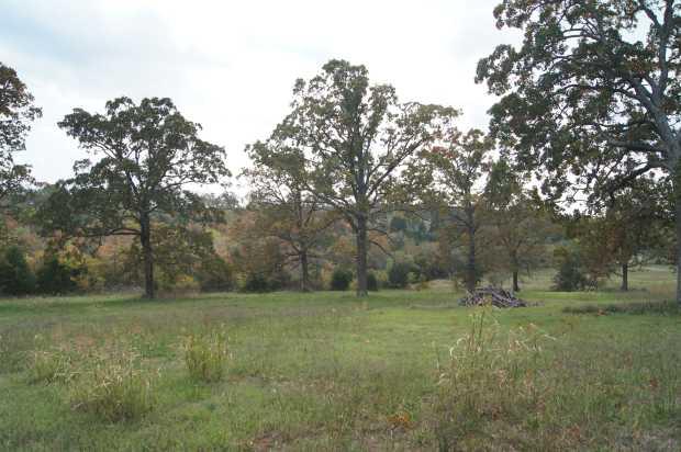 Lot 7 oak trees at Caro Drive